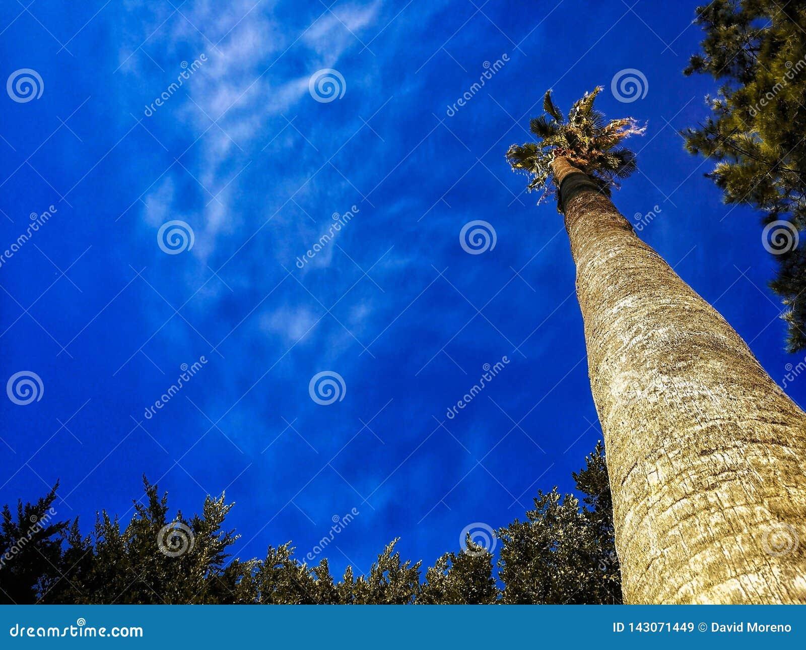 Palmeras y cielo azul, palmeras en la costa tropical, vintage entonado y estilizado, árbol de coco, cielos claros del verano