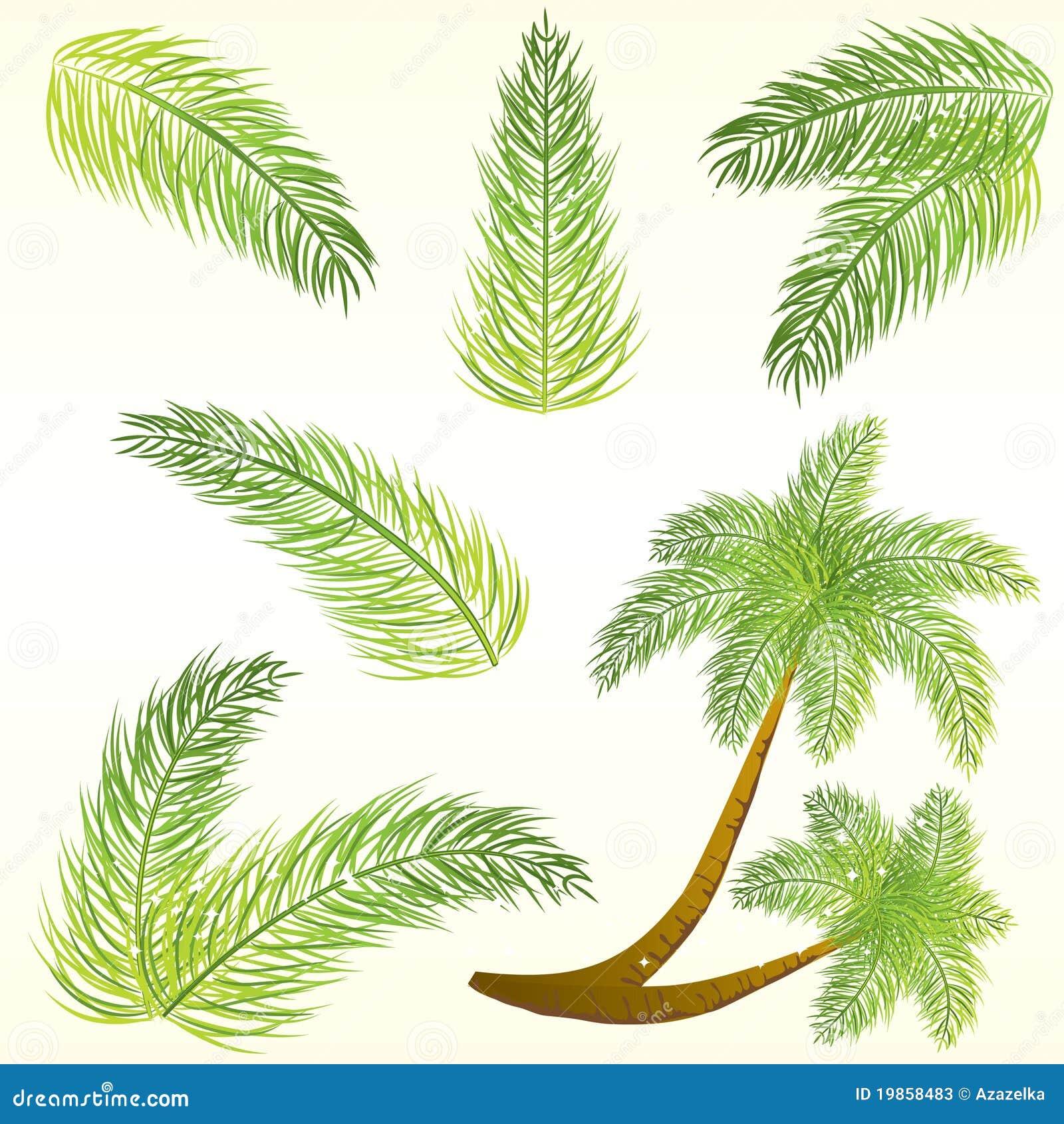 Palmettes tropicales