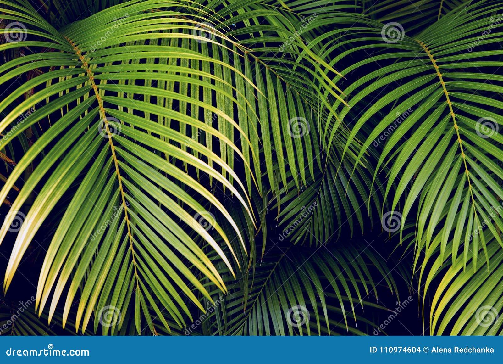 Palmettes tropicales, fond floral sans couture de modèle de feuille de jungle