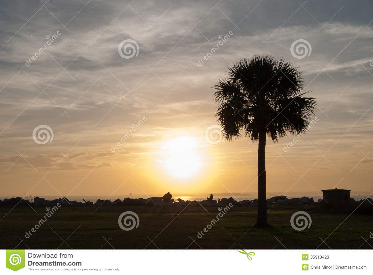 Palmetto At Sunset Stock Photos Image 35310423
