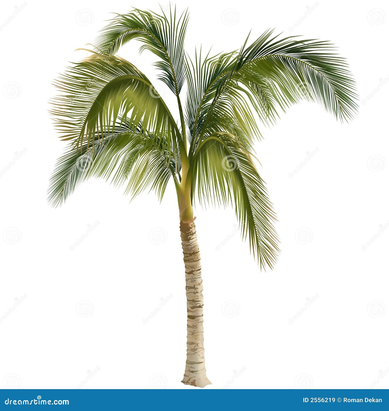 Palmier images libres de droits image 2556219 - Image palmier ...