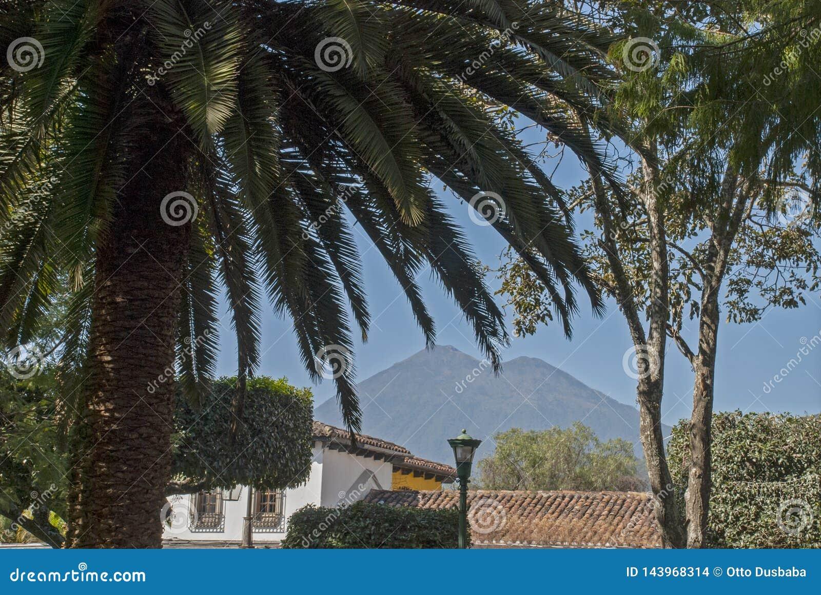 Palmier avec le volcan