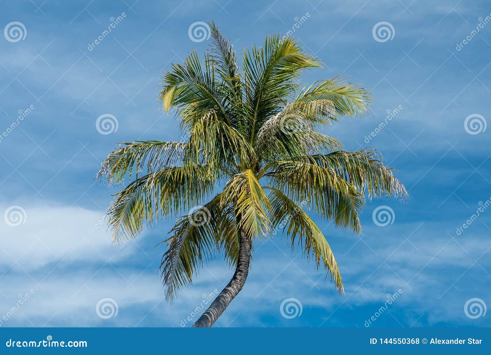 Palmier dans le ciel nuageux