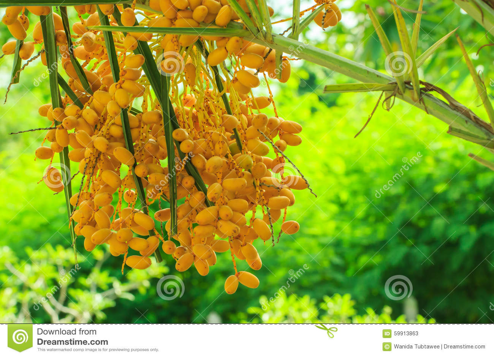 Palmier Dattier Paume Fleur Usine Image Stock Image Du Brun