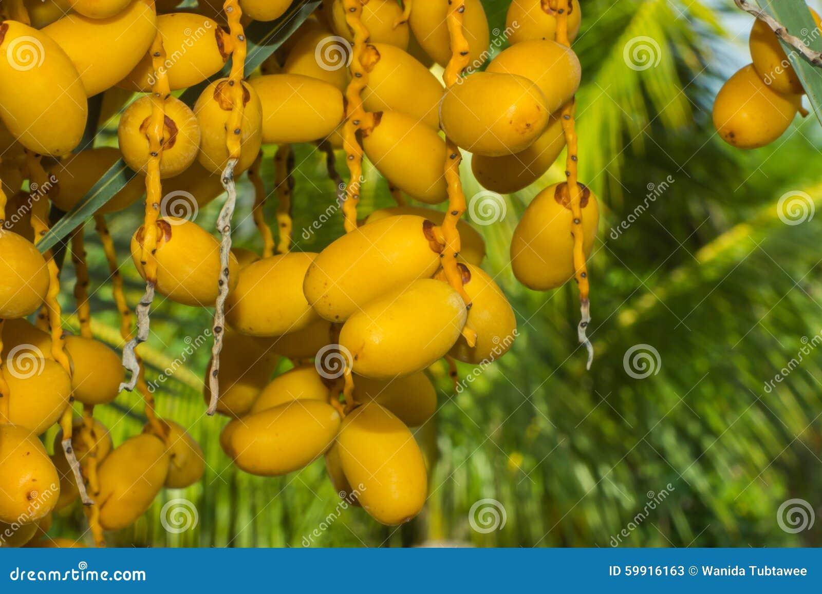 Palmier Dattier Paume Fleur Usine Image Stock Image Du Fleur