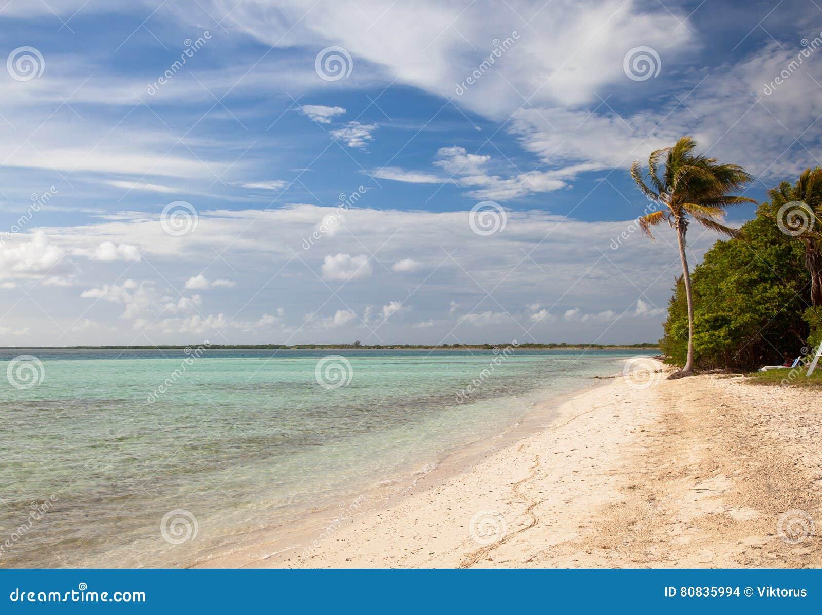 Palmier isolé sur la plage sablonneuse d île tropicale, waterfro de station de vacances