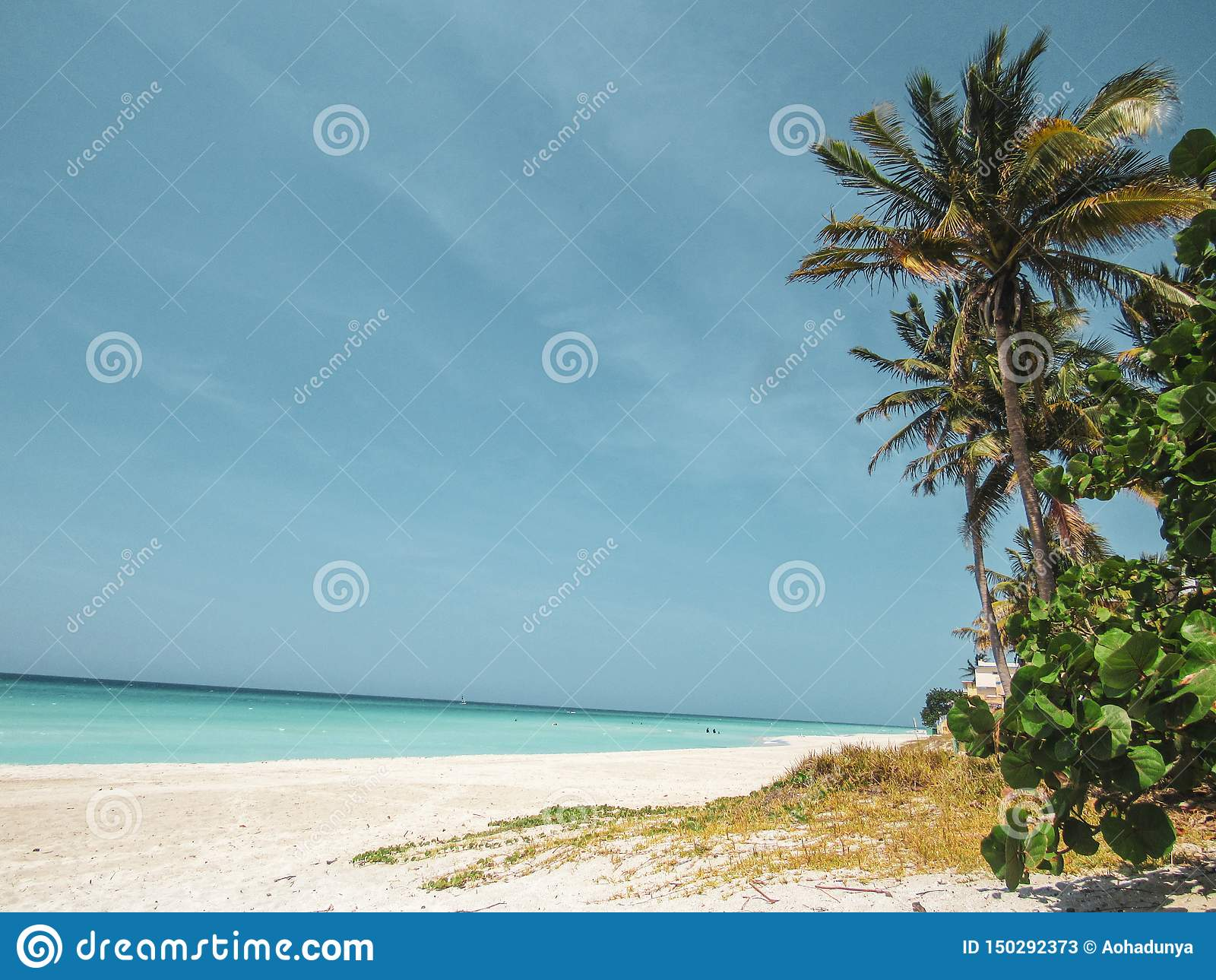 Palmiers et plage sablonneuse blanche au coucher du soleil dans Caribbeans