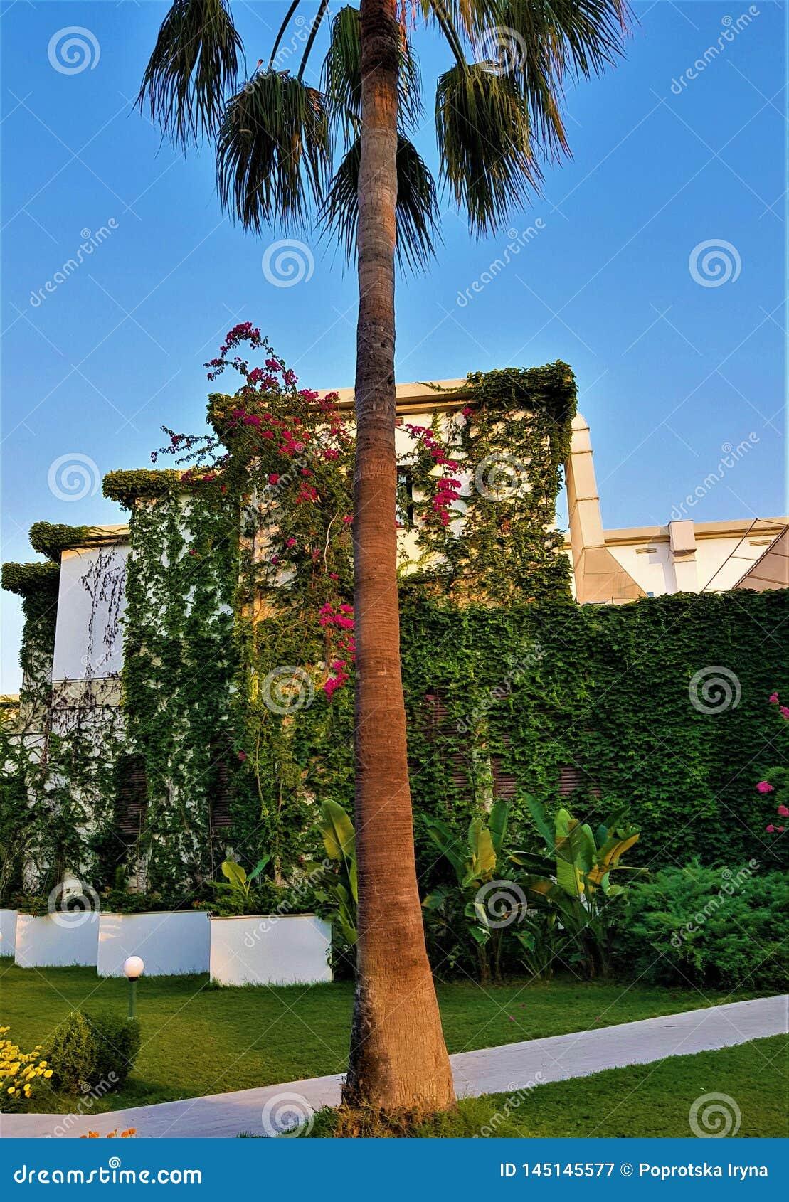 Palmiers, fleurs et lianes dans l hôtel de famille, Kemer, Turquie