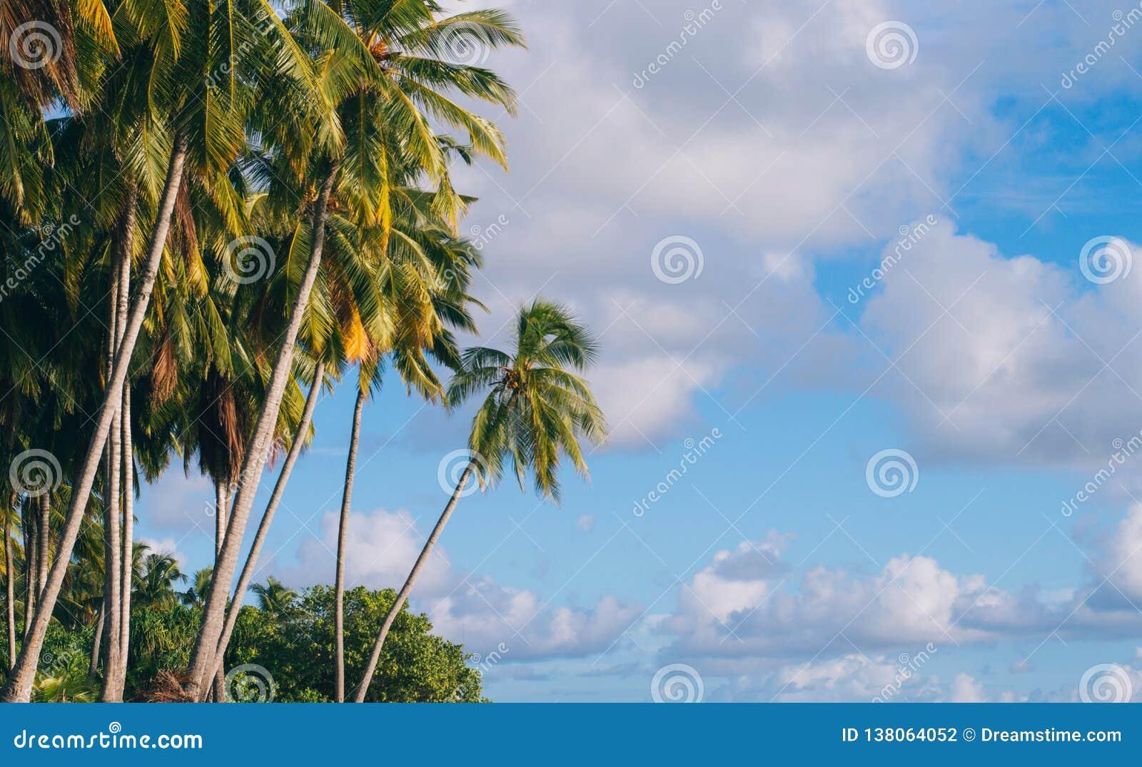 Palmiers par l océan