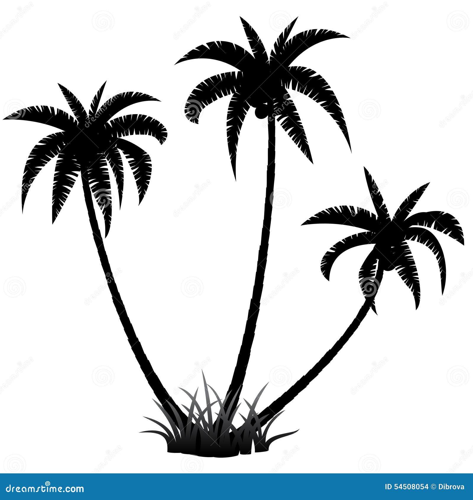 Palmiers silhouettés contre le ciel bleu