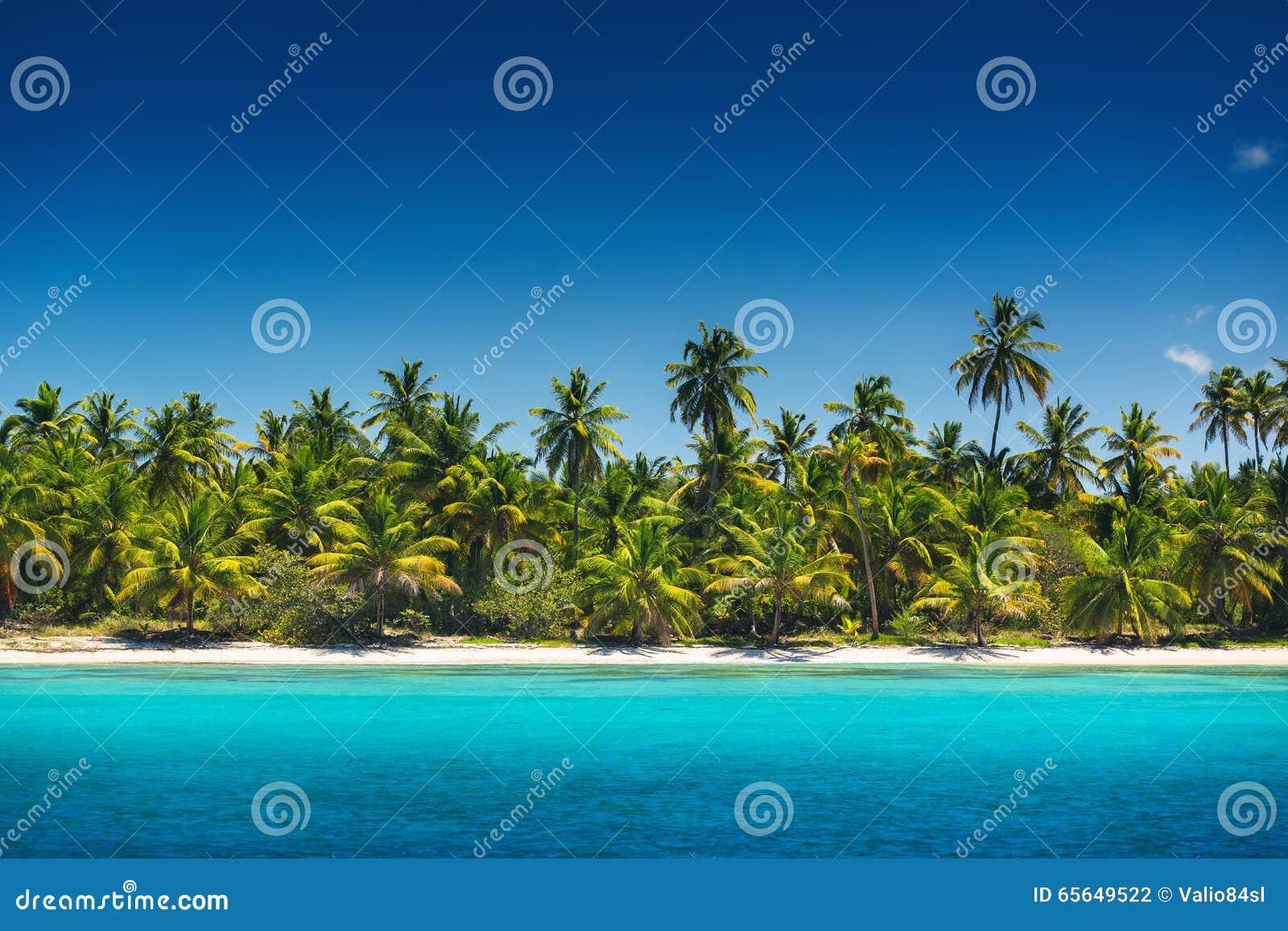 Palmiers sur la plage tropicale, île de Saona, Dominicain Republ