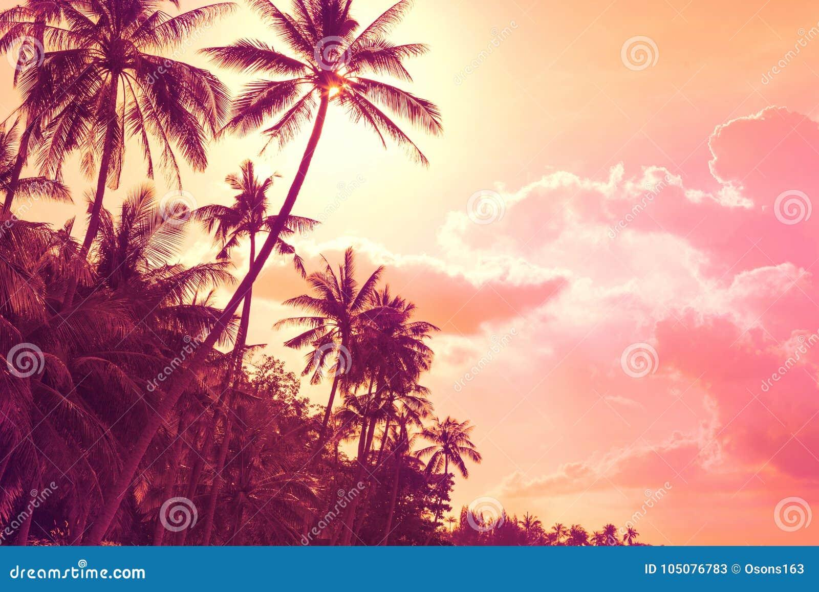 Palmiers tropicaux au coucher du soleil
