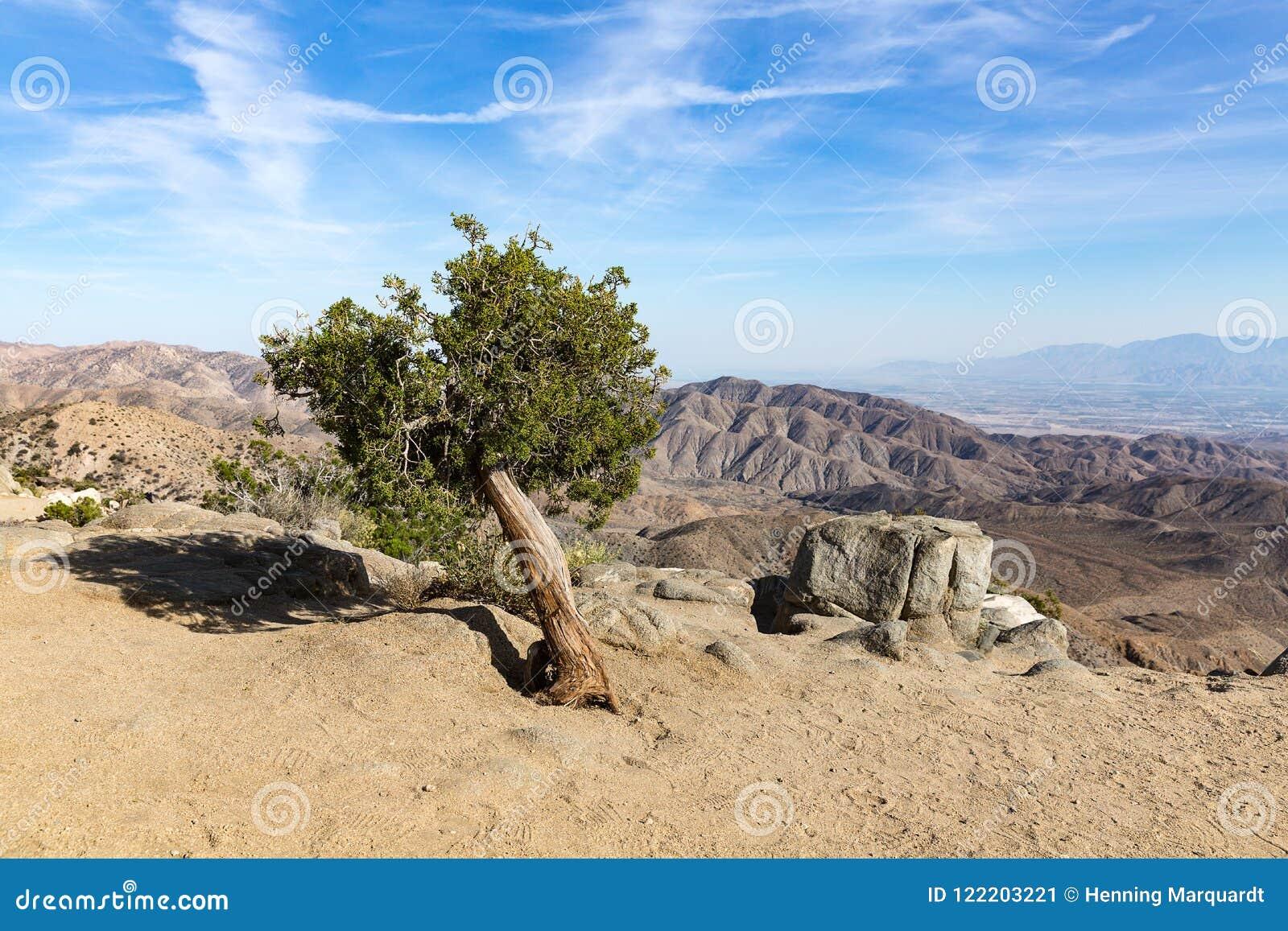 Palmliljan gömma i handflatan i Joshua Tree National Park, San Andreas Fault, Cali