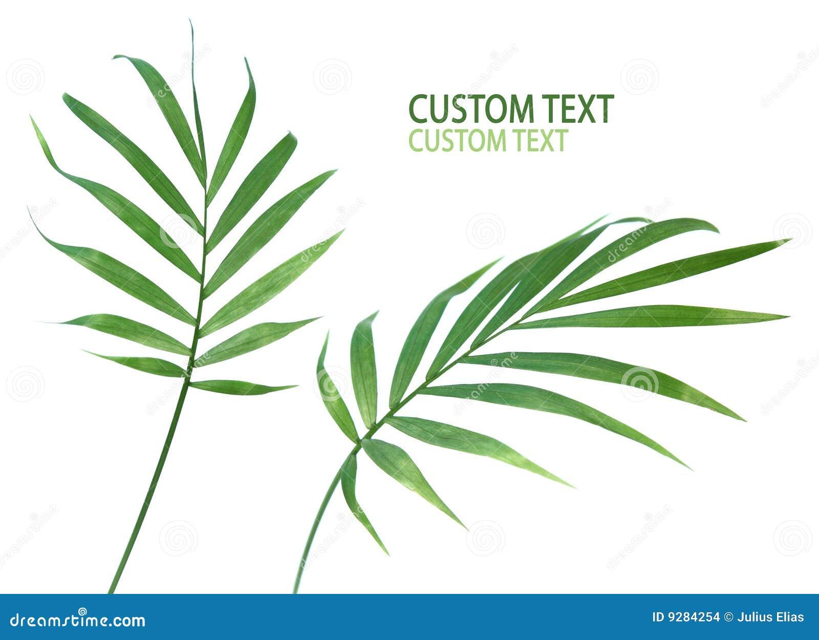 Palmowa liść roślina