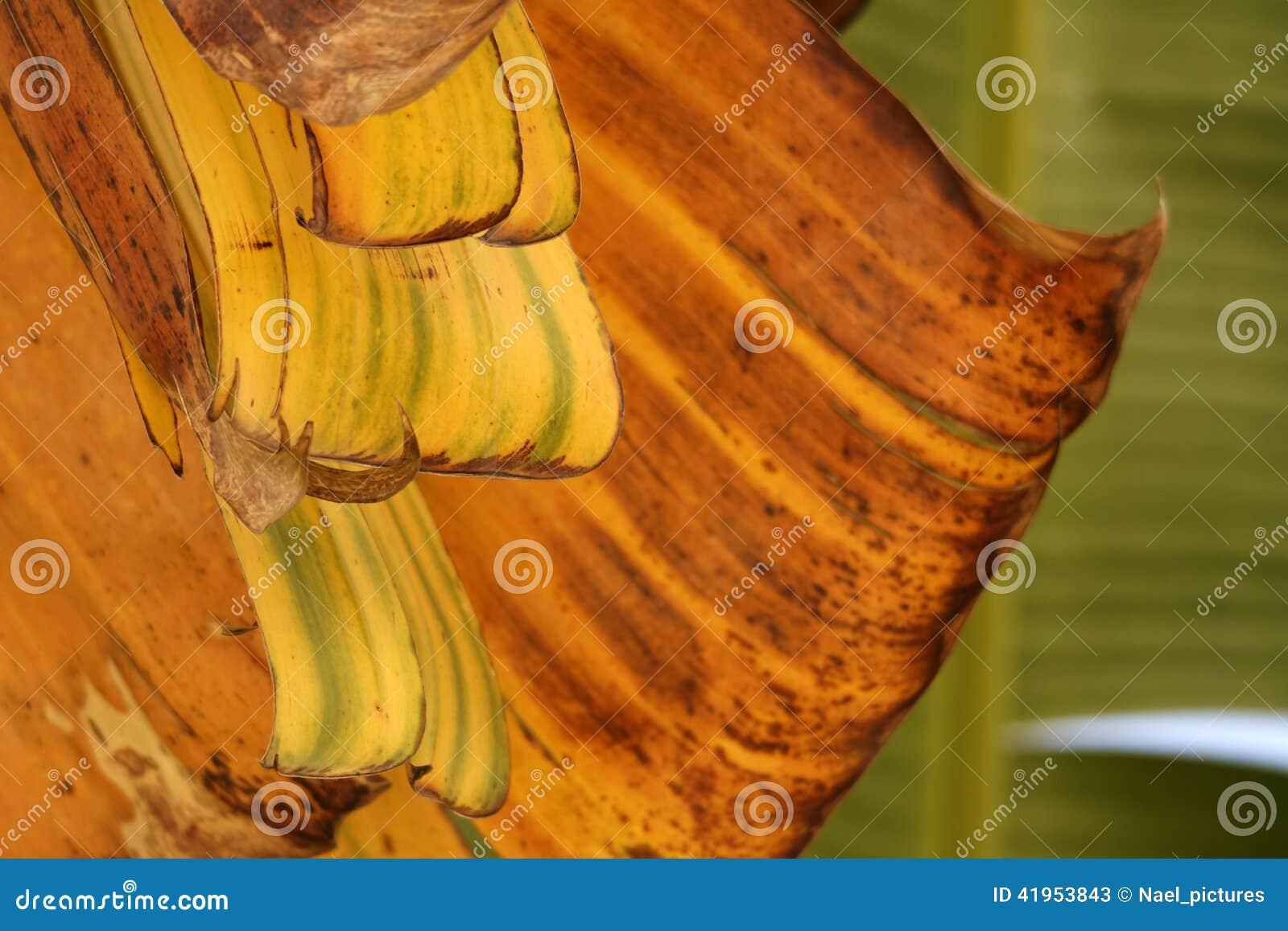 Palmowi tree li?cie
