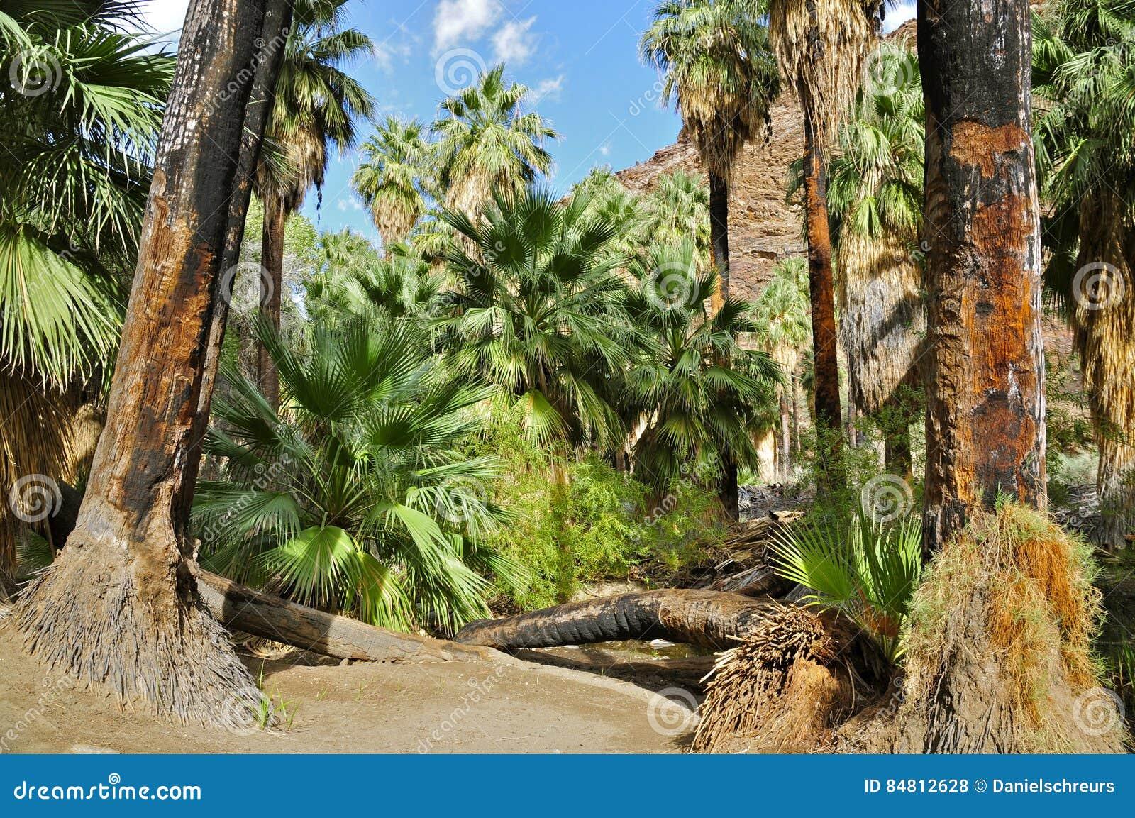 Palmowy jar, palm springs