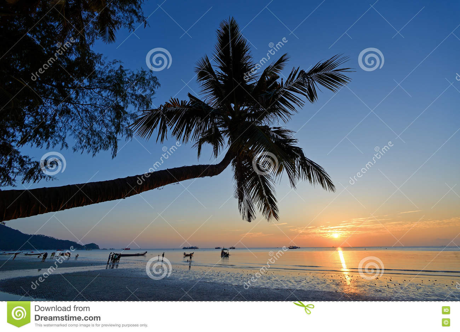 Palmowy koh Tao