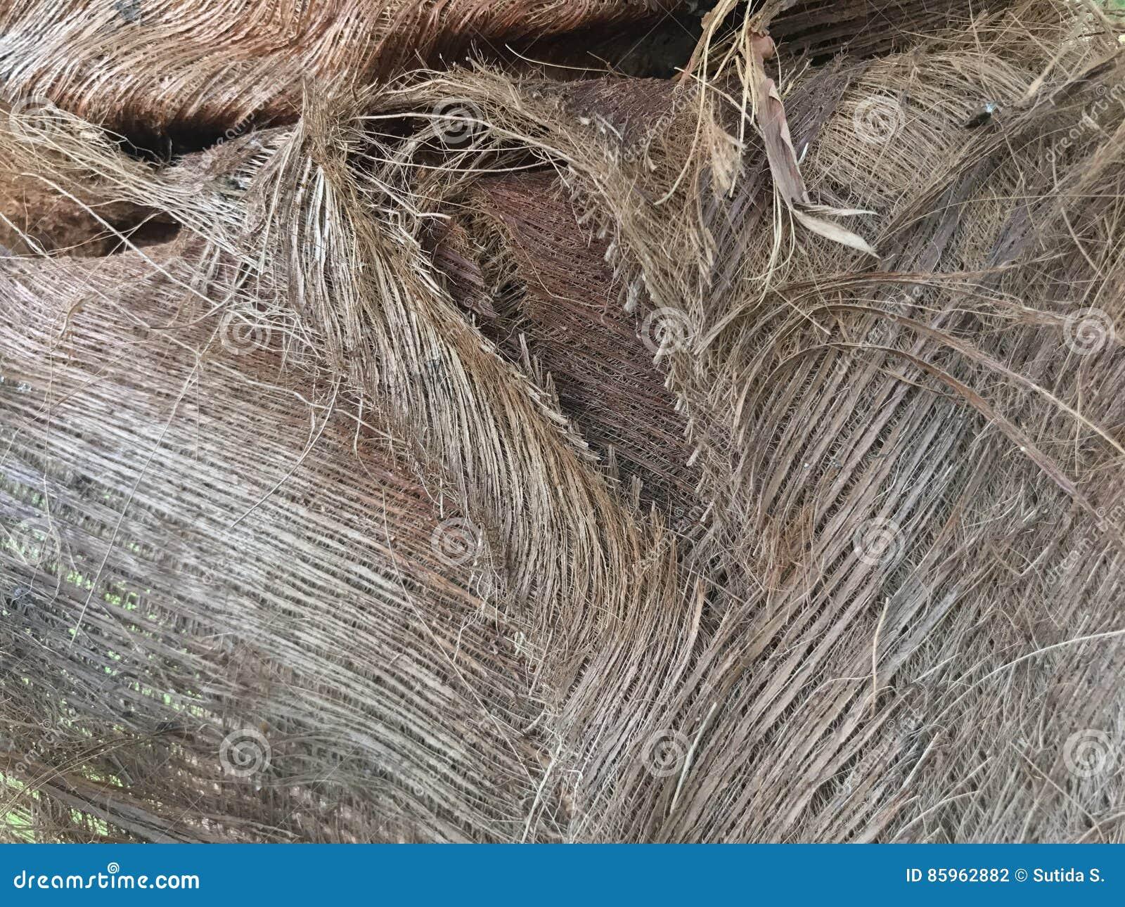 Palmowy sheath