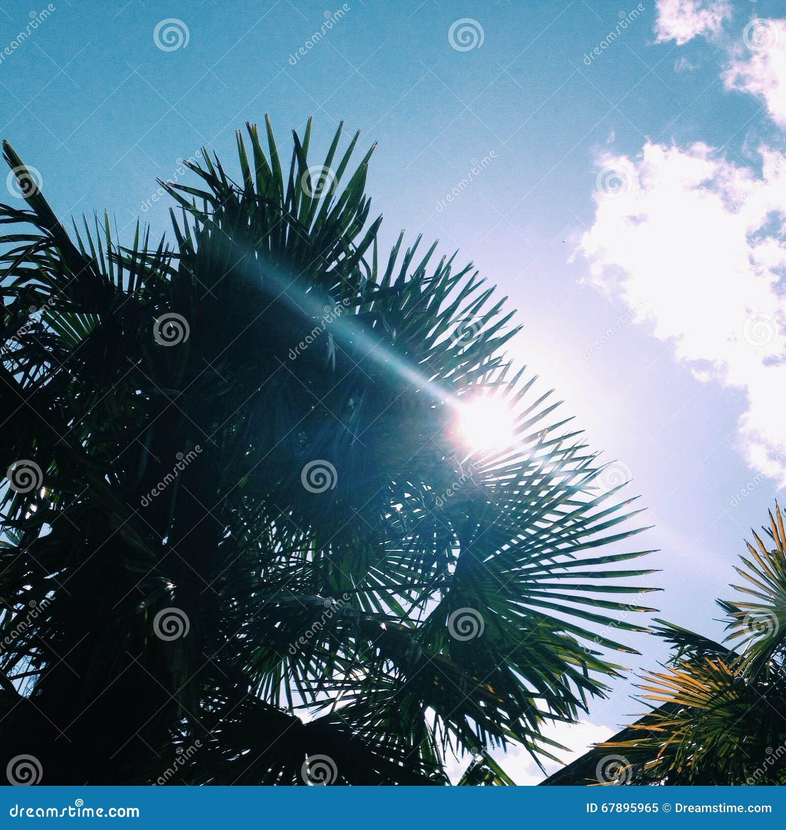 Palmparadijs