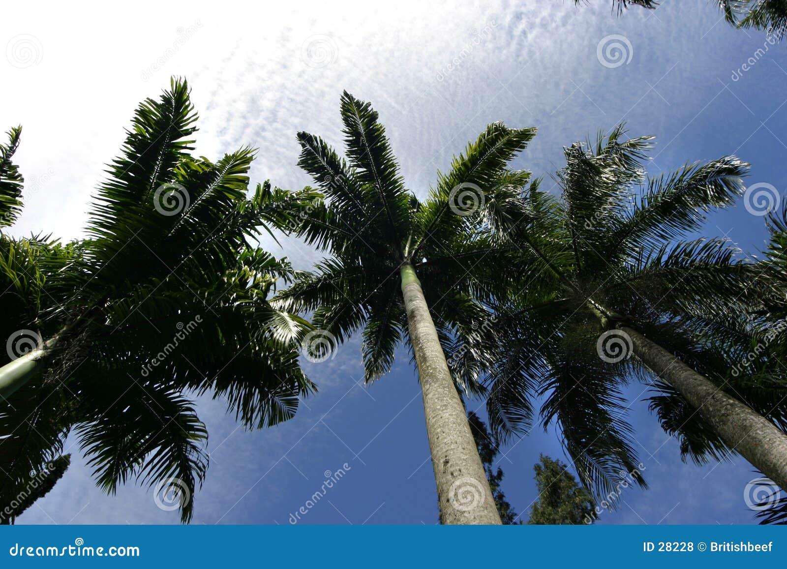 Palms against sky