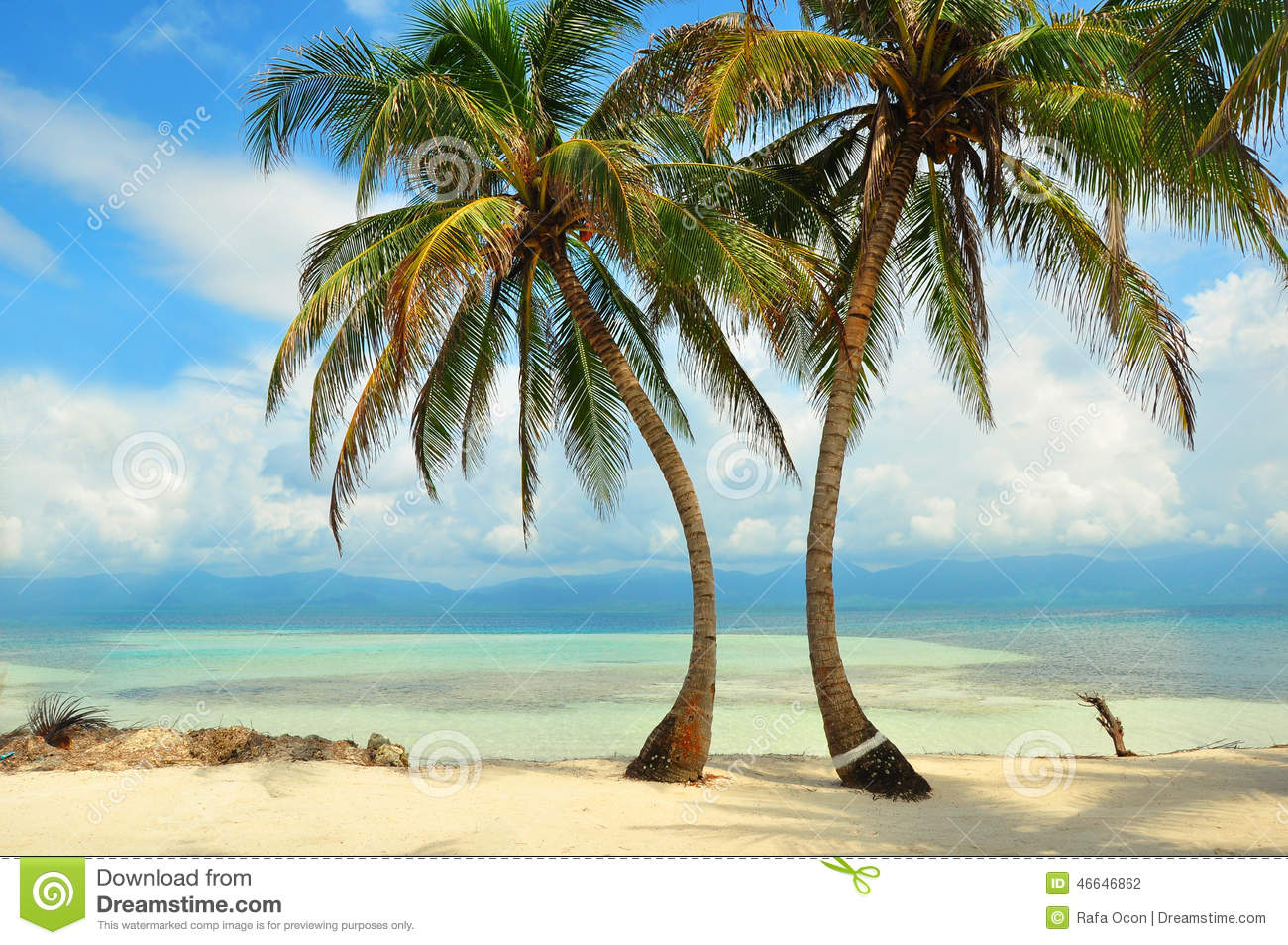 Palms On The Beach In The Caribbean Sea Stock Photo ...