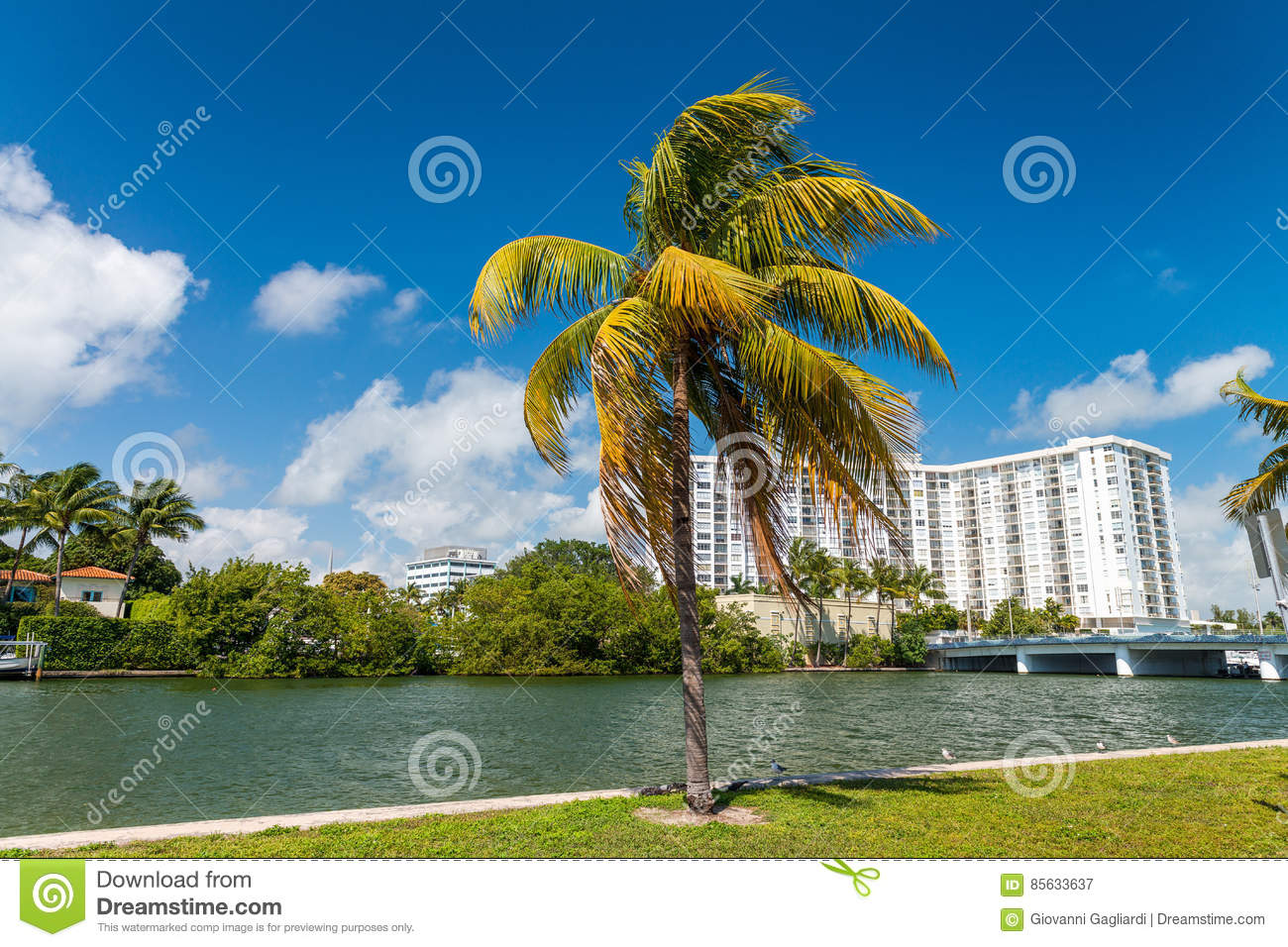 Palms and buildings of Miami Beach - Florida, USA