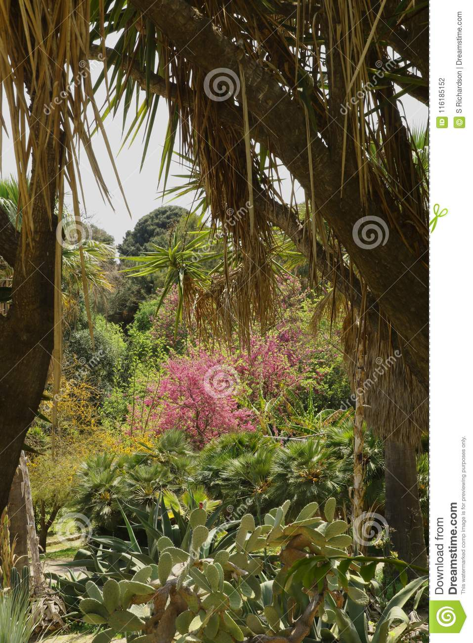 Palms And Trees In The Botanical Gardens Stock Photo - Image of ...
