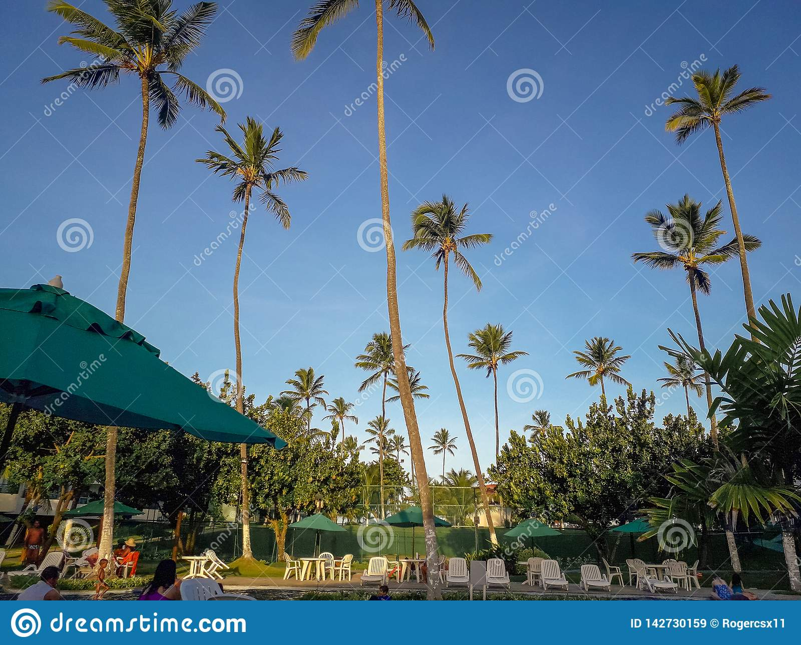Palms and trees in Flat Resort of Brazil
