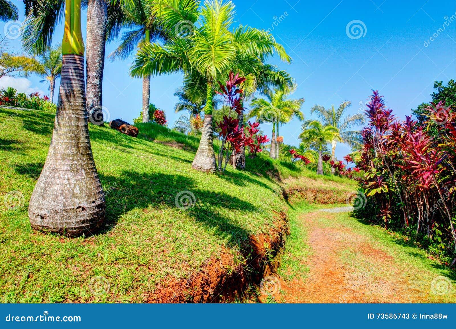Palms In Tropical Garden Garden Of Eden Maui Hawaii Stock Image