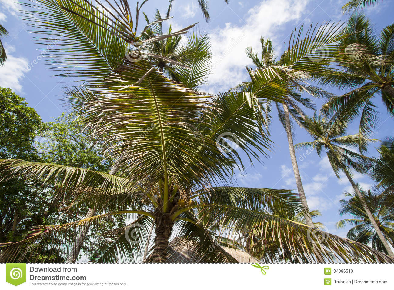 Palms Under Sky Stock Photo - Image: 34386510