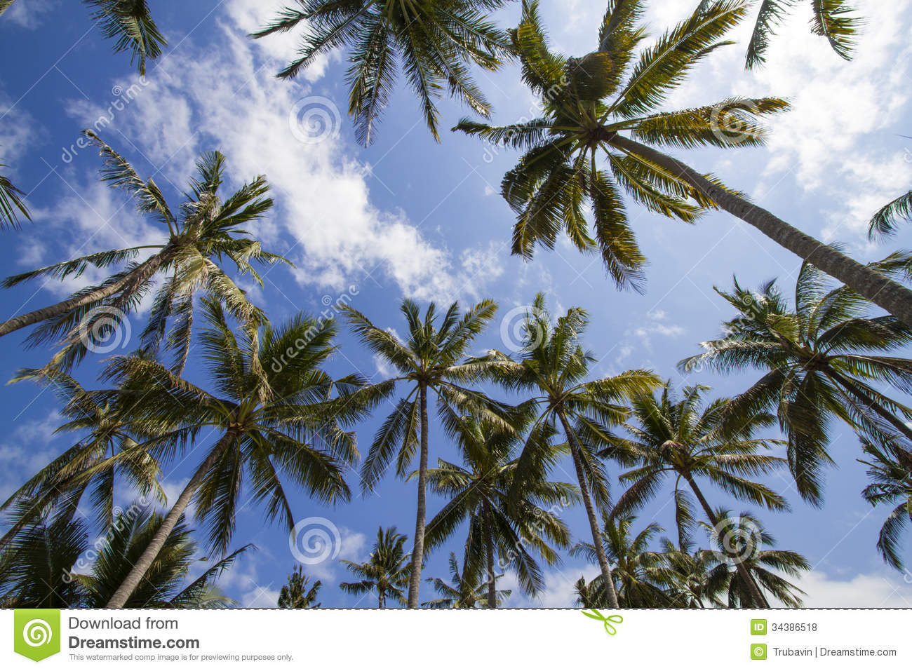 Palms Under Sky Royalty Free Stock Photos - Image: 34386518
