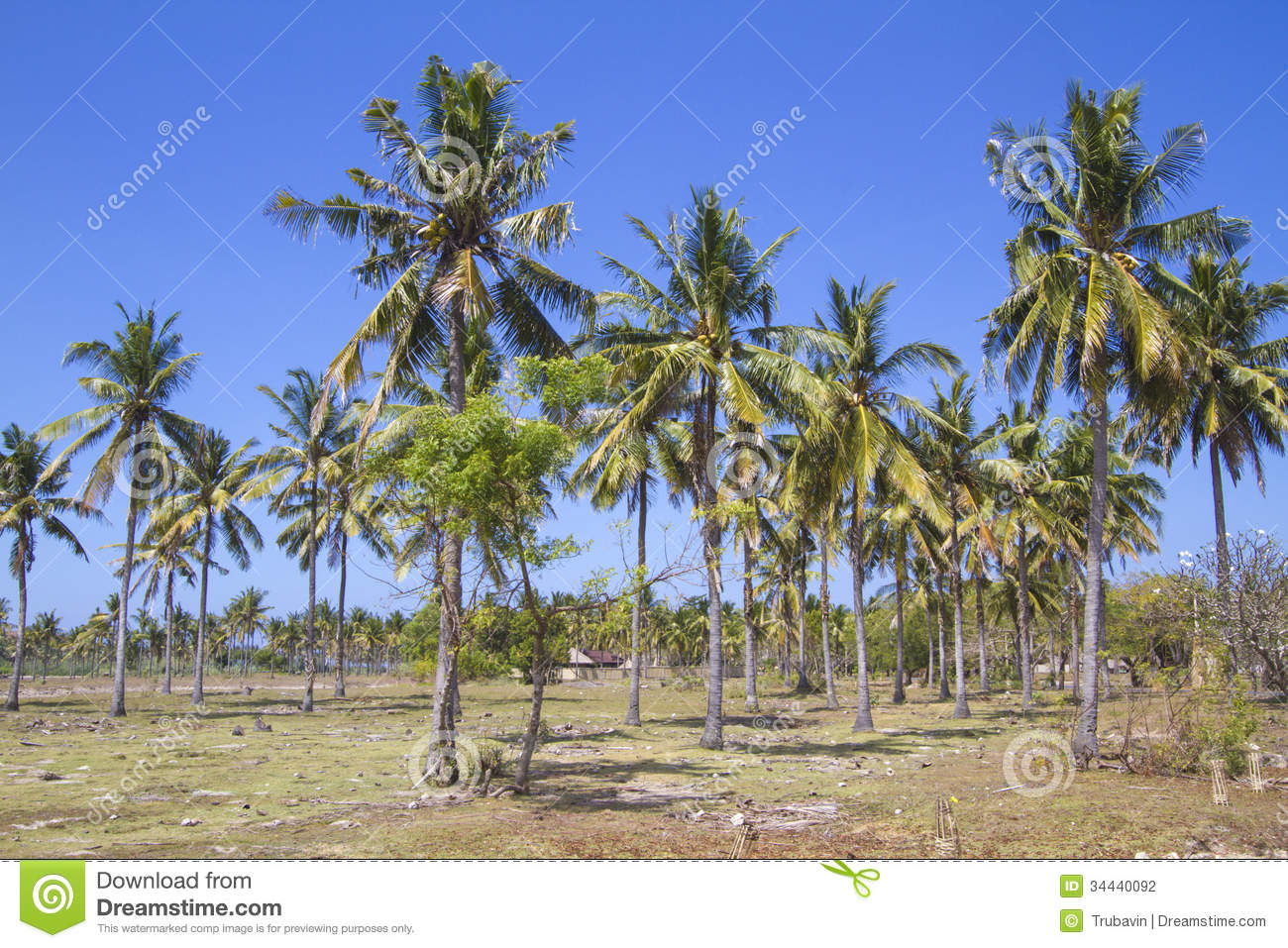 Palms Under Sky Stock Photography - Image: 34440092