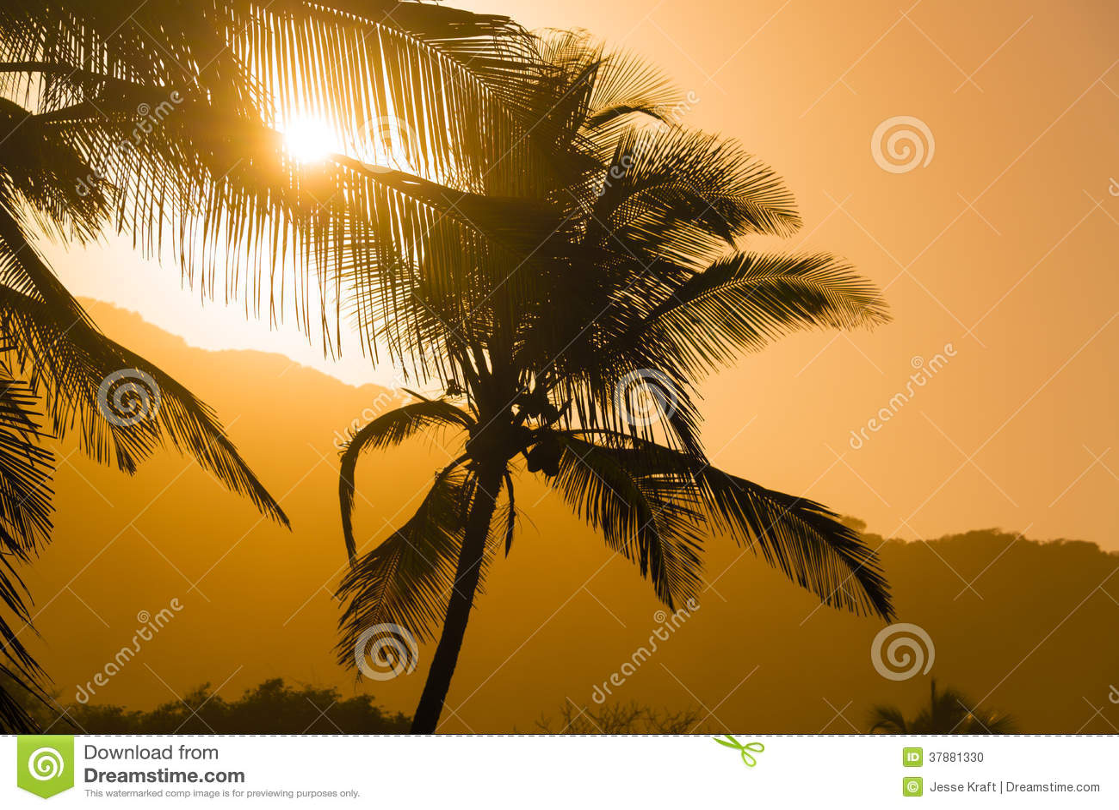 Palmsilhouetten