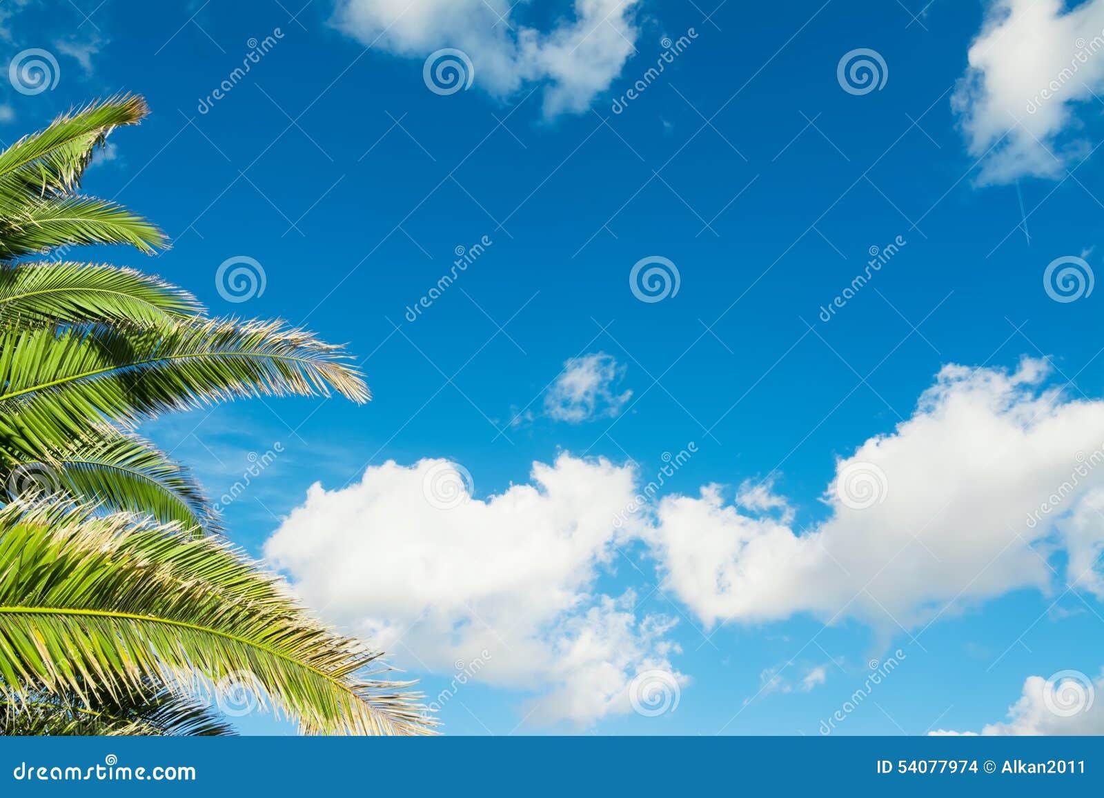 Palmtakken onder een blauwe hemel