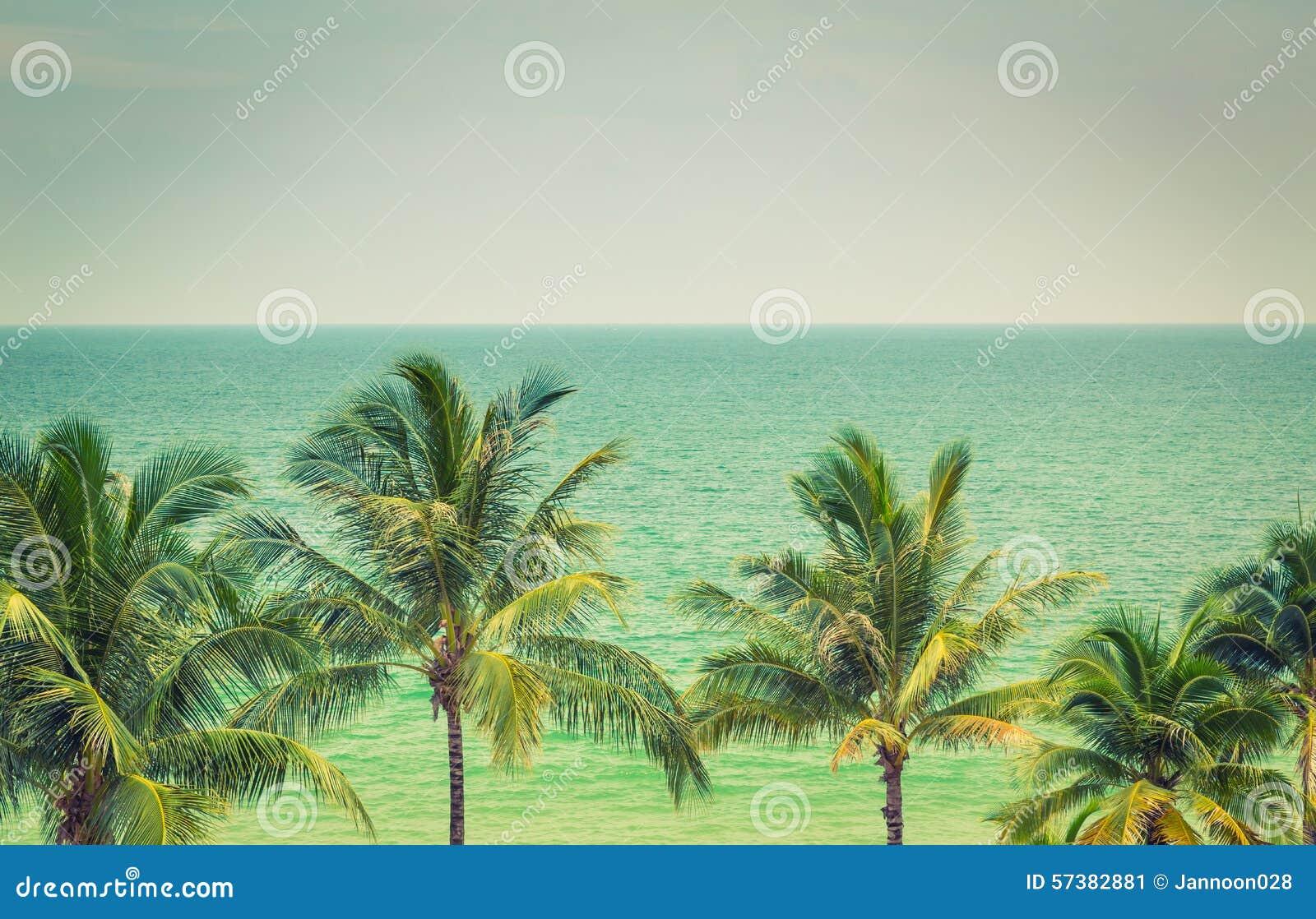 Palmträd (den filtrerade bilden bearbetade VI
