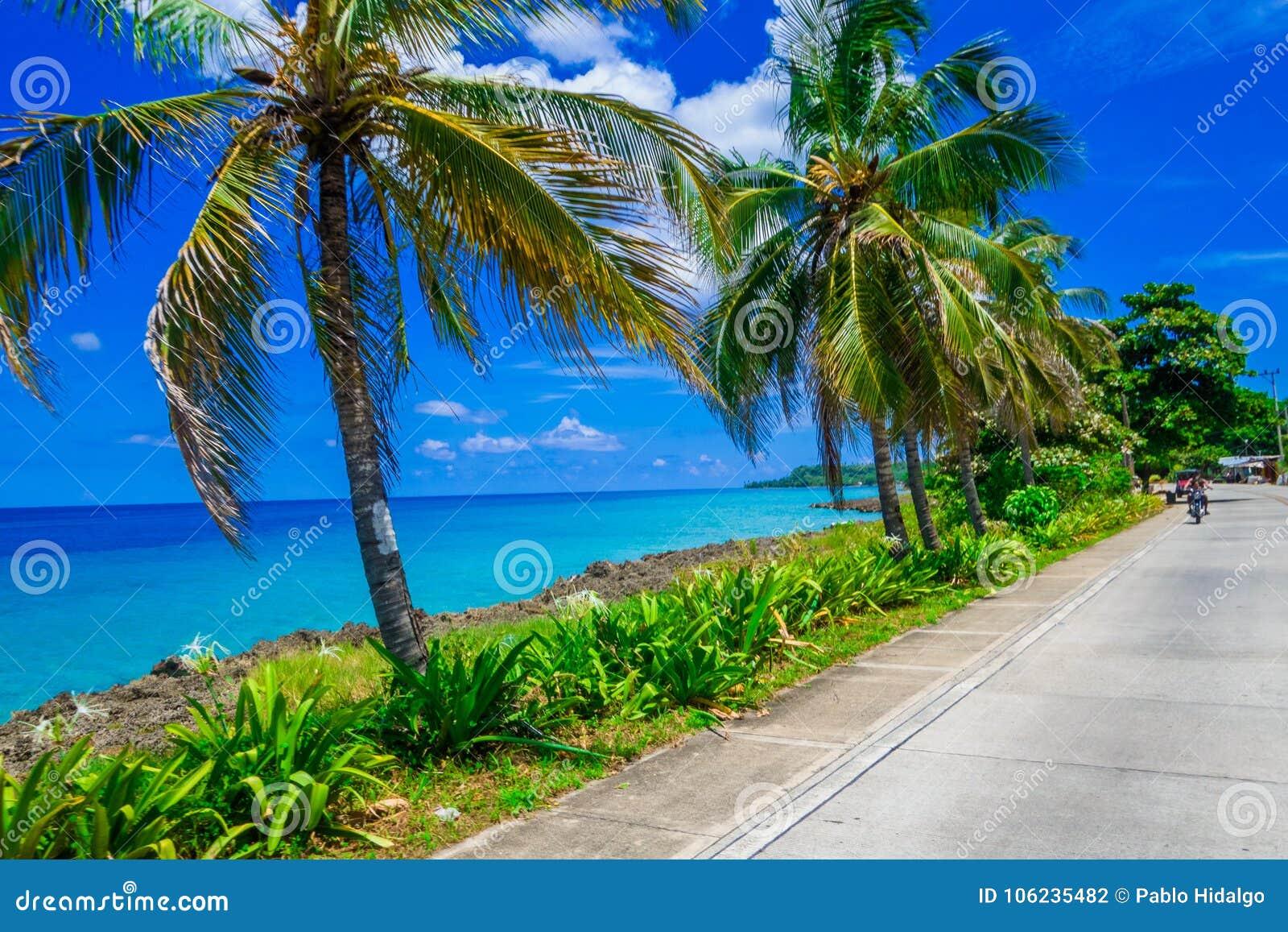 Palmträd i en sida av en väg i San Andres, Colombia i en härlig strandbakgrund