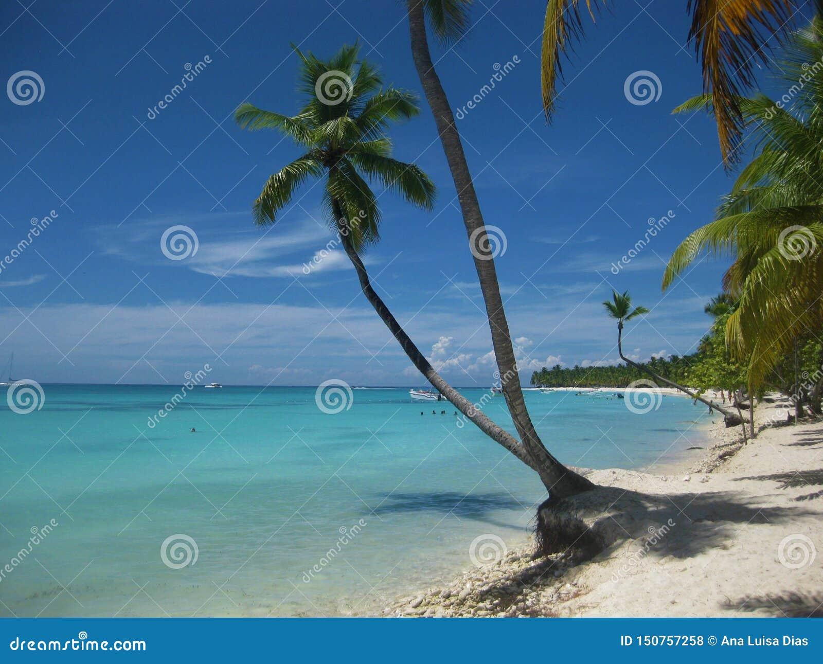 Palmträd i karibisk strand