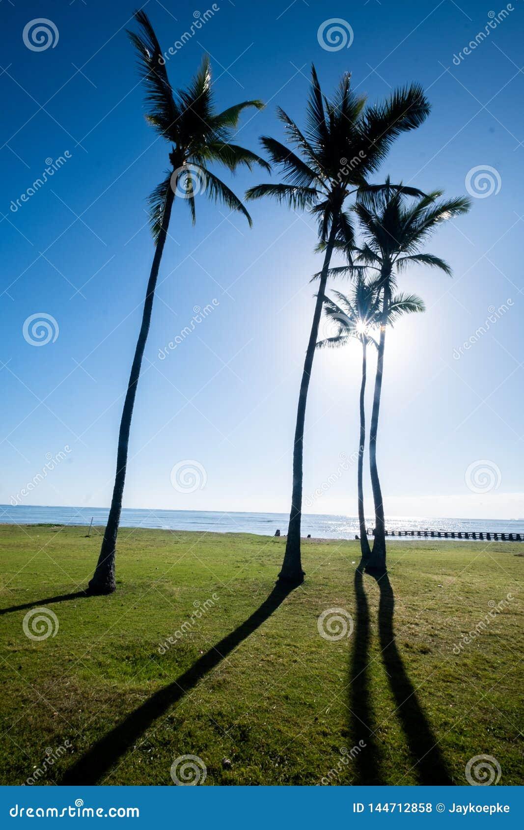 Palmträd med solen som silhouetting dem