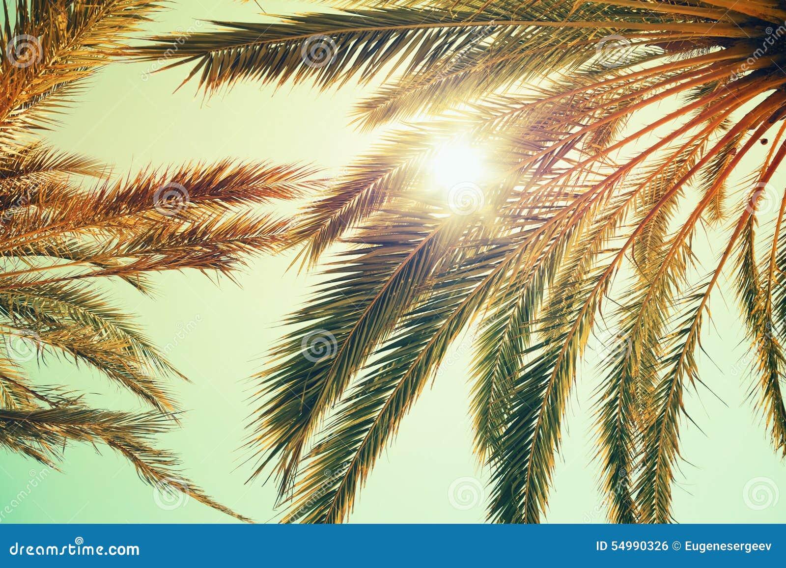 Palmträd och glänsande sol över ljus himmel