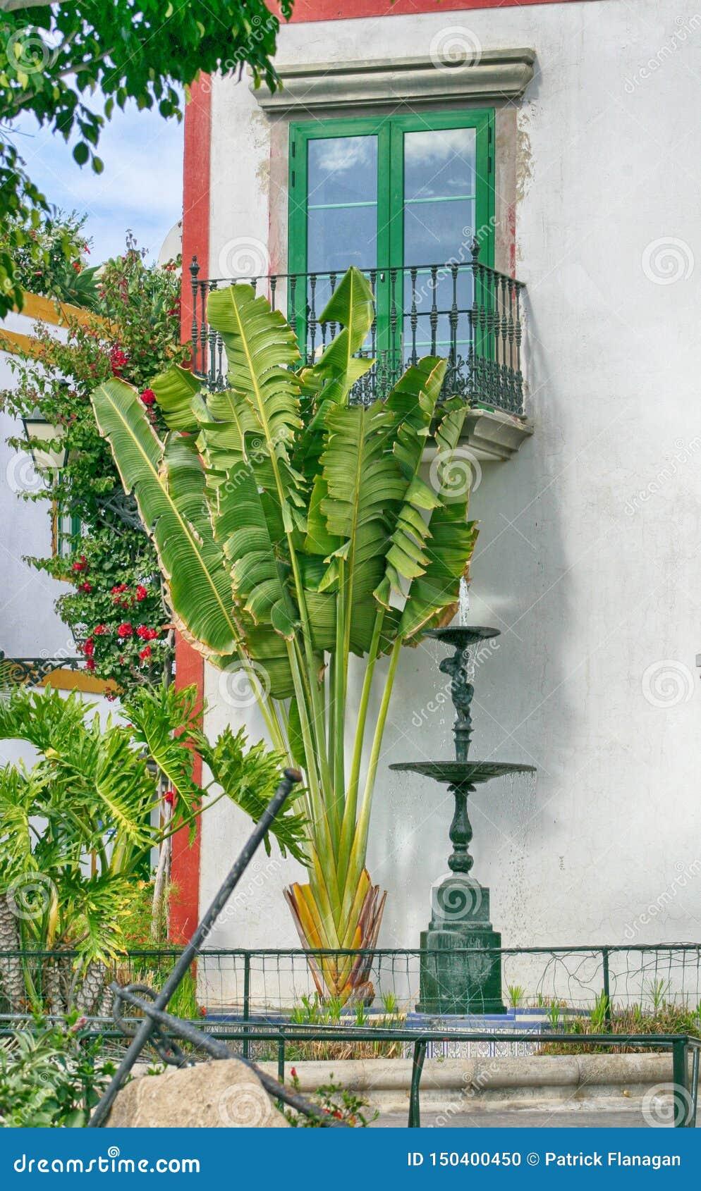 Palmträd och springbrunn framme av ett spanskt fönster