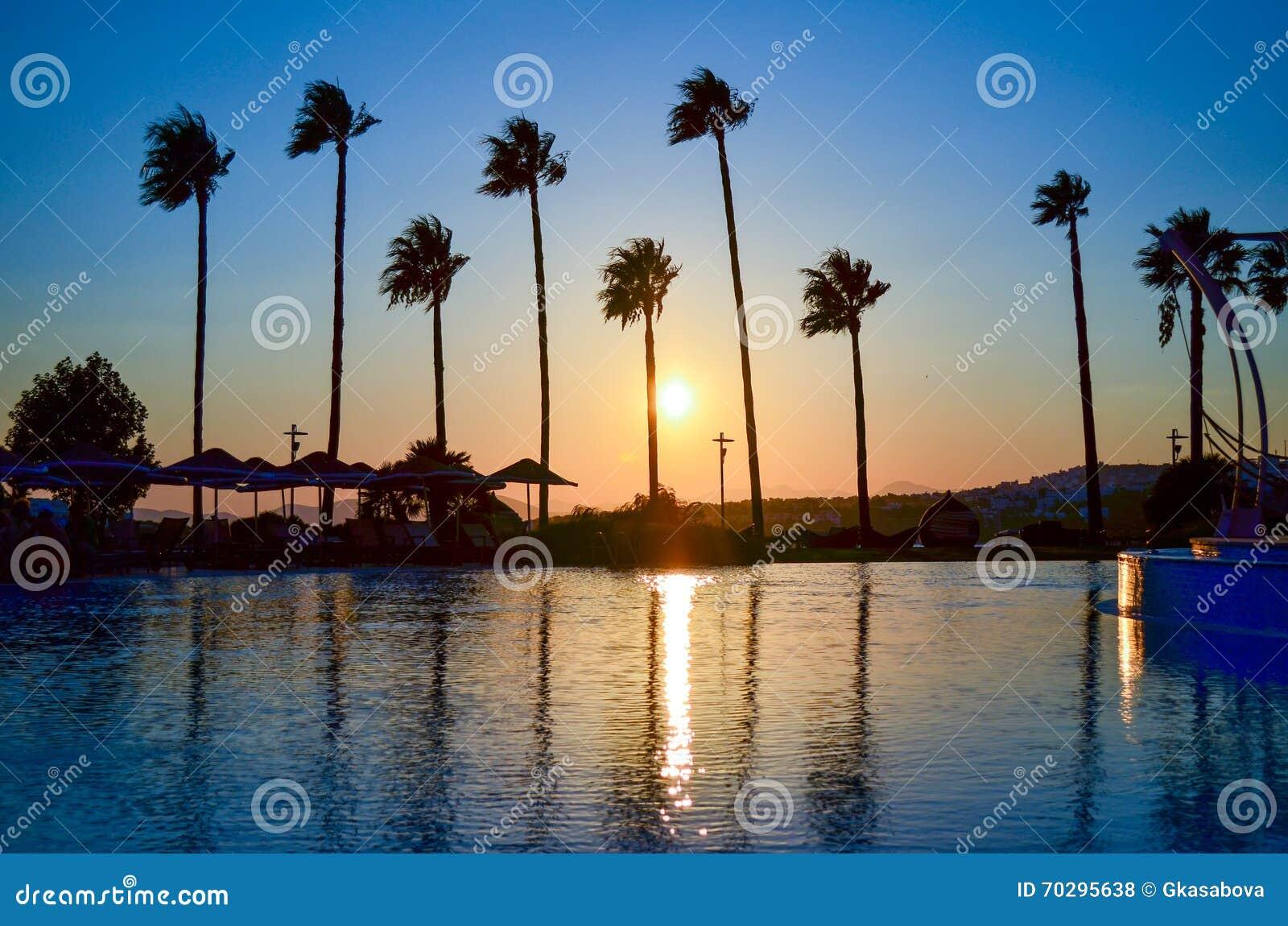 Palmträd på den guld- solnedgången