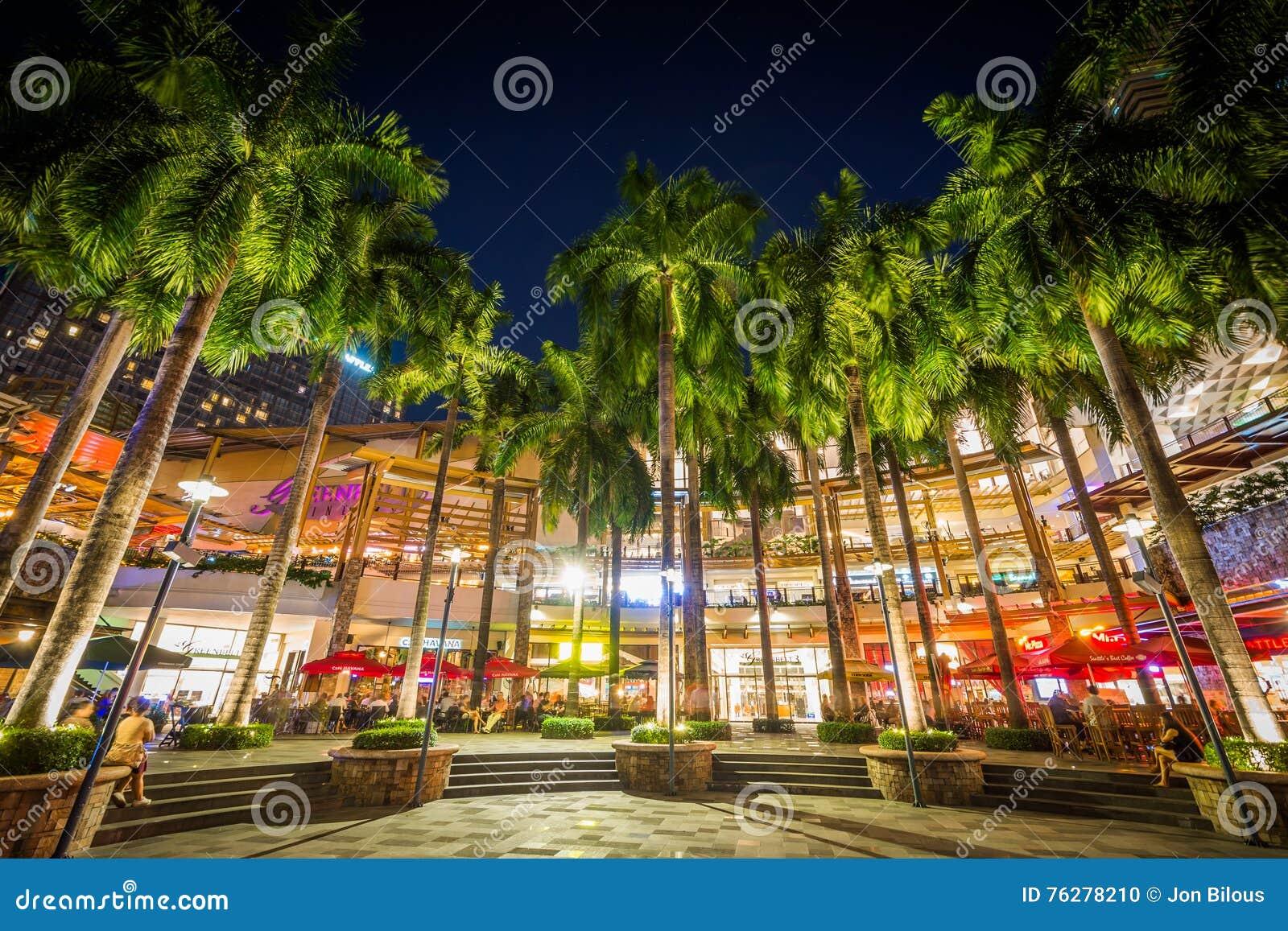 Palmträd på natten, på grönt bälte parkerar, i Makati, tunnelbanan Manila,