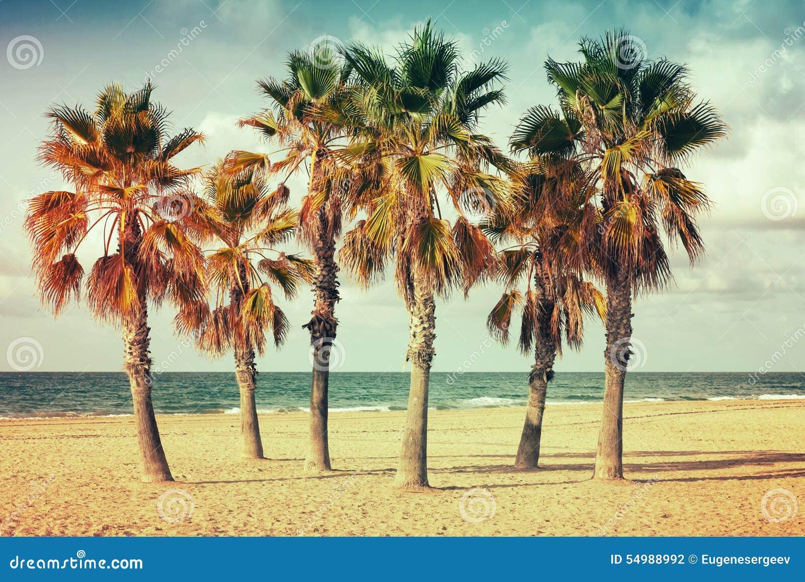 Palmträd växer på den tomma sandiga stranden i Spanien
