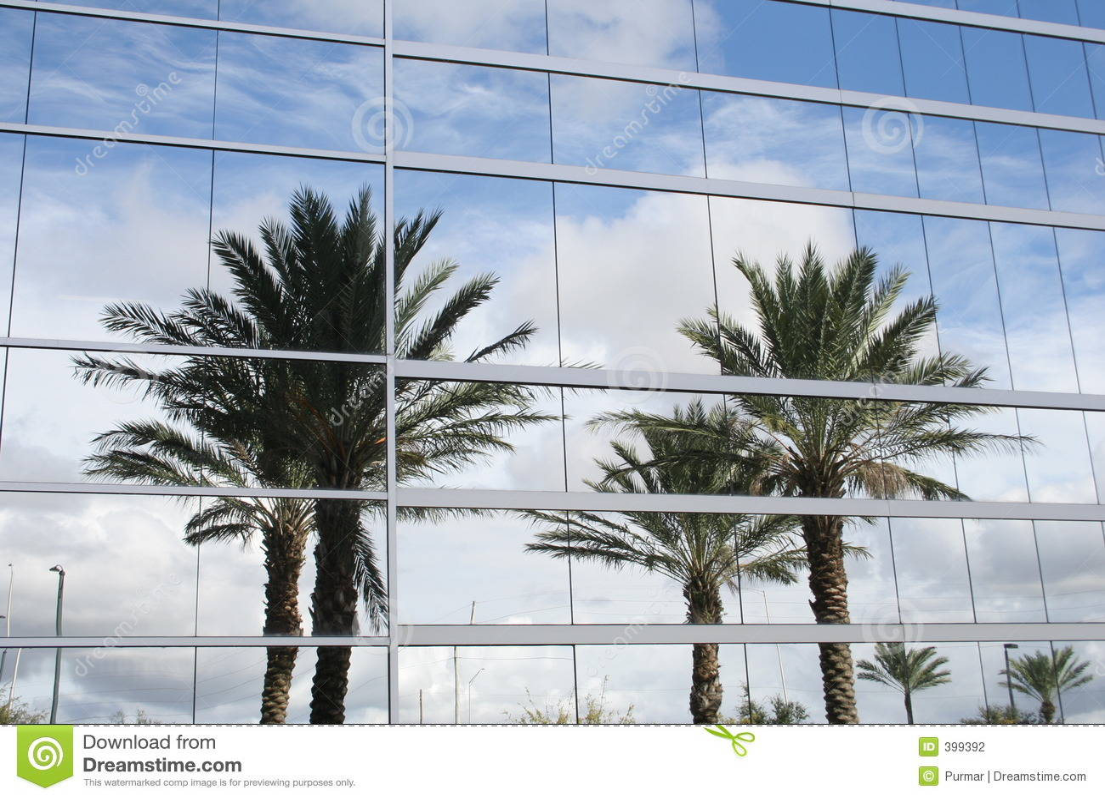 Palmträdreflexion
