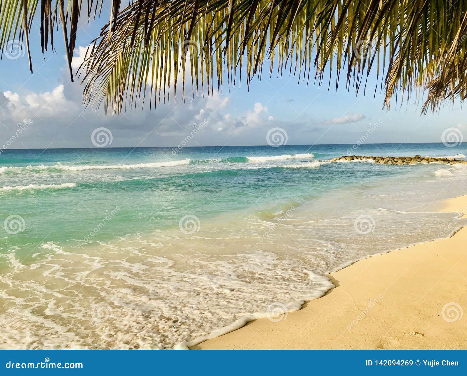 Palmträdsidor över den Dover stranden
