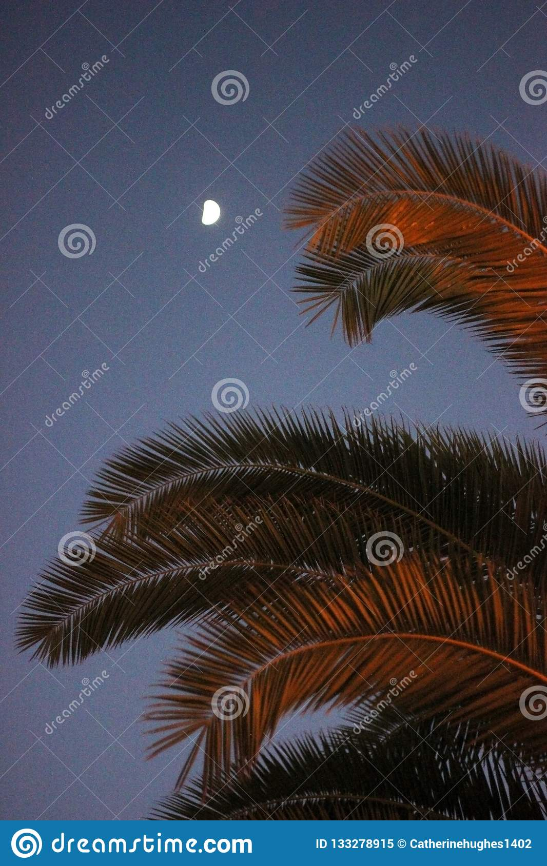 Palmträdsidor i de sista minuterna av solnedgången