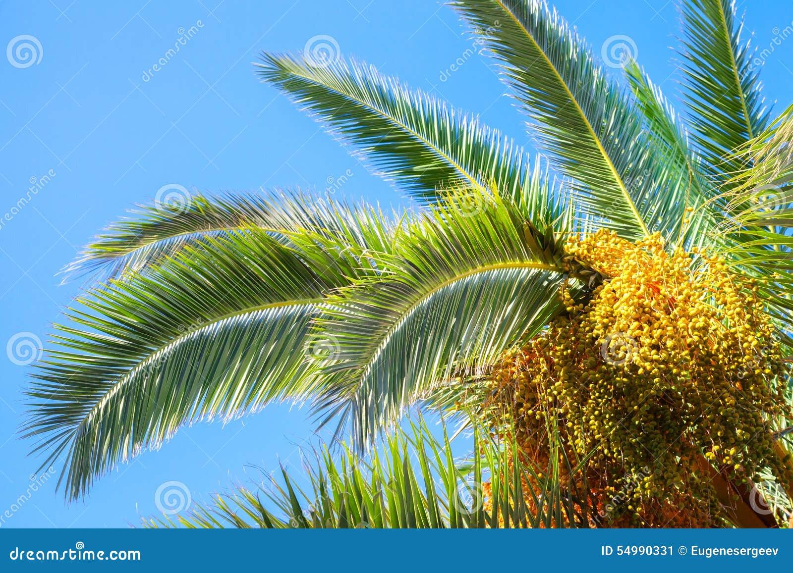 Palmträdsidor och data över blå himmel