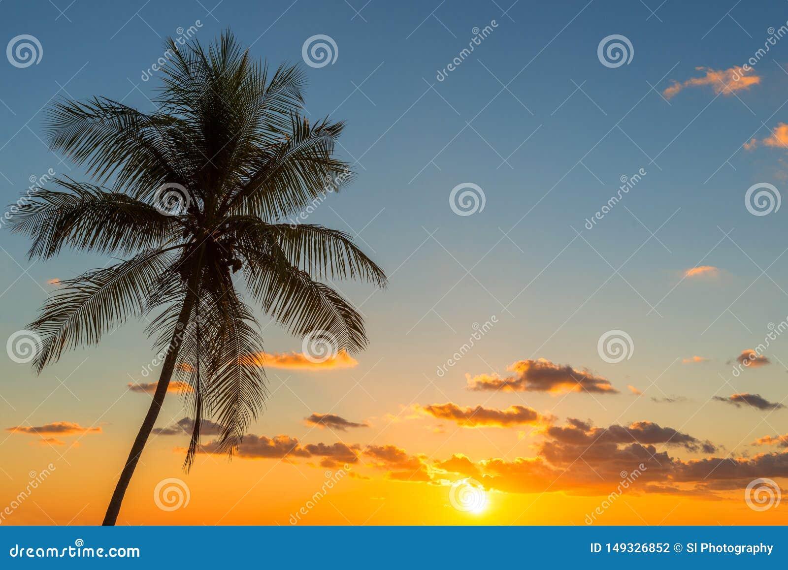 Palmträdsolnedgång i Costa Rica