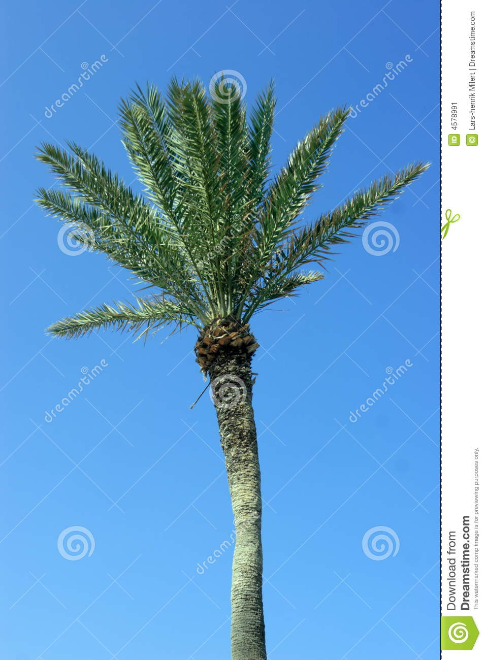 Palmtree on blue background