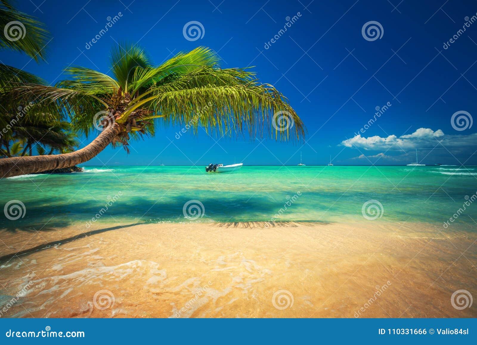 Palmtree et plage tropicale Île exotique Saona en mer des Caraïbes, République Dominicaine
